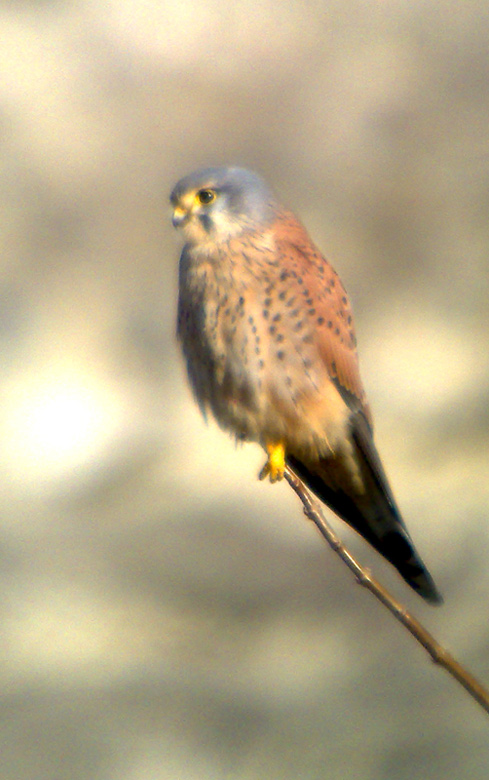 Phonescoping